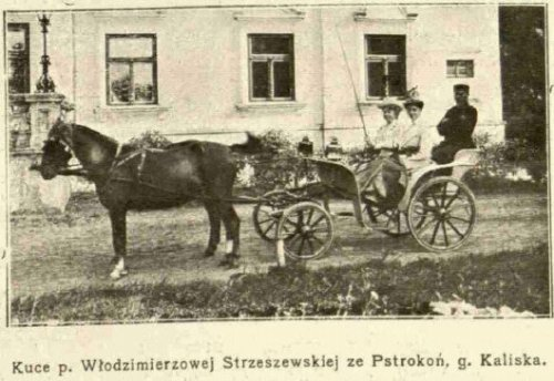 - pstrokonie_1910.jpg